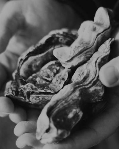 our-oysters-bw